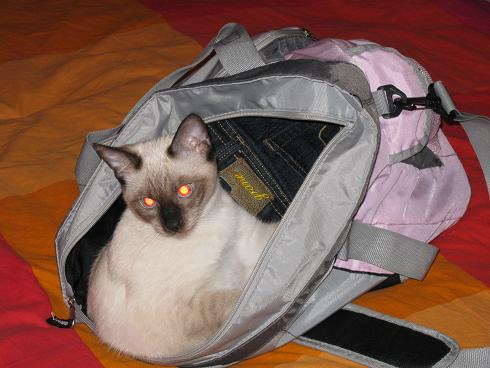 Athena in the bag