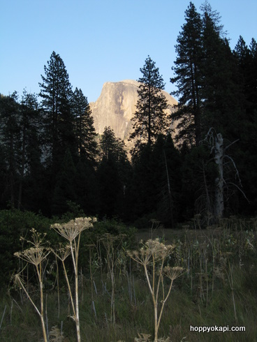 Half Dome and meadow, just before sunset