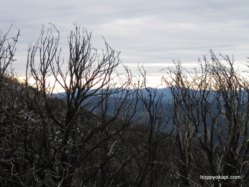 Morning on the Mountain - traces of last year's fires
