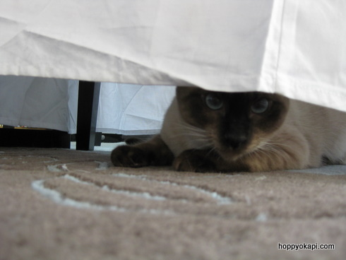 Athena hides under another chair