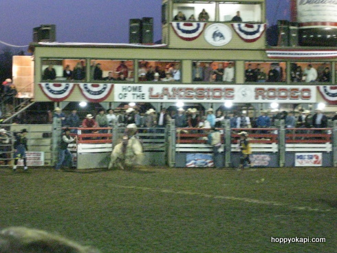 Another Bull Rider