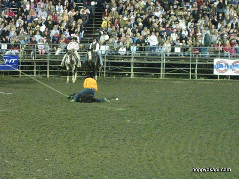 Calf Roping - the calf has been conquered!