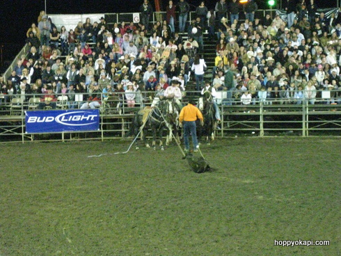 Calf Roping - heading back to the horse