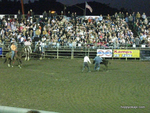 Freeing the calf - harder than roping it!