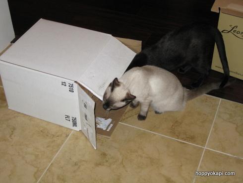 ooh, a box!