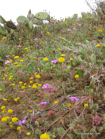 Wildflowers on the cliffs