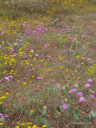 Another field of flowers