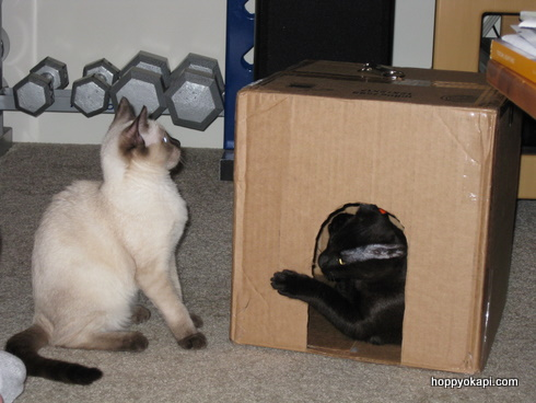 Playing in the first-ever box fortress