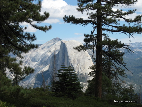 Peek-a-boo! View fo Half Dome through the pine trees