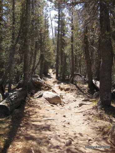 The pine-flanked trail on the way back...