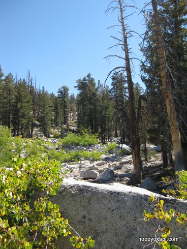 High-Sierra scenery