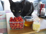 Zephyr investigates the tomatoes