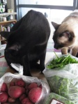 Kitties love the CSA