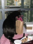 Zeph attacks the gift bag...
